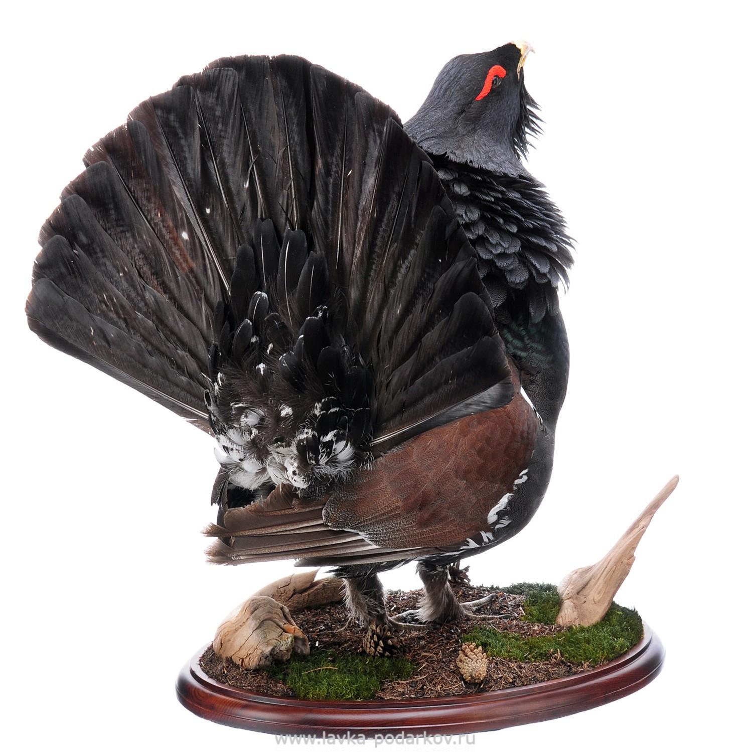 чучела птиц фото верхней фотографии рижская